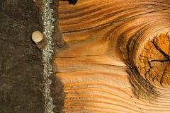 Pin inextricable Asphalt Shingle Roofing Siding en bois superficiel par les agents par conseil photo stock