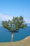 Pin, lac Baikal Photos stock