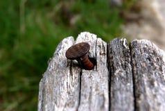 Pin in legno Fotografia Stock Libera da Diritti