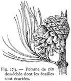pin-pomme de Stock Images