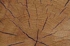 Pin rustique superficiel par les agents naturel en bois de texture de substrat de base de conception d'eco criqué de fond photos libres de droits