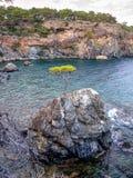 Pin seul - baie de Phaselis - amyuva, Kemer, côte et plages de ‡ de à de la Turquie Images stock