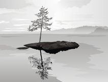 Pin solitaire sur la roche Images stock