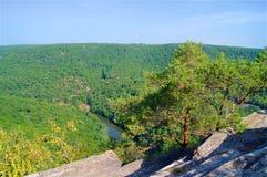 Pin sur des roches en parc national image libre de droits