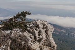 Pin sur une roche devant une falaise photo stock