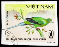 Pin-tailed Green-pigeon (Treron apicauda), Doves serie, circa 1981. MOSCOW, RUSSIA - SEPTEMBER 26, 2018: A stamp printed in Vietnam shows Pin-tailed Green-pigeon royalty free stock image