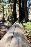 Pin tombé le long des traînées des montagnes Forest National Park, Nevada de ressort photo libre de droits