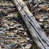 Pin tombé le long des traînées des montagnes Forest National Park, Nevada de ressort image libre de droits