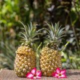 Pina在新鲜的两个菠萝的colada鸡尾酒在热带庭院里 海岛巴厘岛,印度尼西亚 库存照片