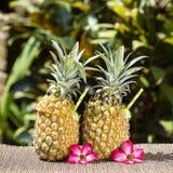 Pina在新鲜的两个菠萝的colada鸡尾酒在热带庭院里 海岛巴厘岛,印度尼西亚 图库摄影