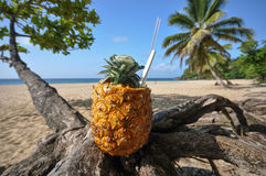 Pina Colada on the Beach. Pina Colada served in fresh pineapple perched on a tree on a beach at Playa Grande in Cabarete, Dominican Republic Stock Images