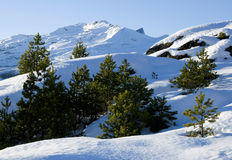 Pinaceae and shade on mountain Stock Photos