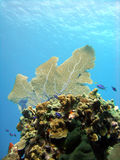 Pinacle de corail Photo libre de droits
