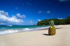 Pinacolada on beach of  ocean Stock Image