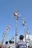 Pinang tree climbing contest Stock Image