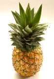 Pinapple. Whole isolated pineapple royalty free stock photos