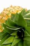 Pinapple. Isolated lying pineapple on white background Stock Images