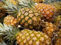 Pinapples Royalty Free Stock Image