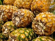 pinapples Стоковое Изображение