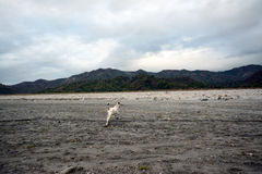 Pinatubo wędrówka Zdjęcia Stock