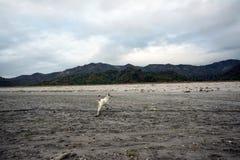 Pinatubo-Wanderung Stockfotos
