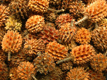 Pince Cones Background. A background of small sized pine cones Stock Images