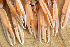 Pincer of scampi Royalty Free Stock Image