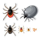 Pincers and their stages. Of growth from small to big Royalty Free Stock Image