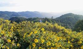Pinces de Dok Bua sur une montagne image stock