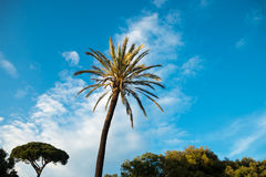 Pincio-парк в Rom Италии Стоковые Изображения RF