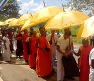 PINDAPATHA CHARIKA斯里兰卡 免版税库存图片