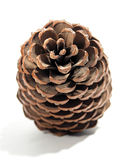 Pine. Berrie of a pine Royalty Free Stock Images