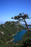 Pine. On mountain top and lake in background Stock Photos