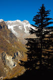 Pine. Silhouette South side of Monte Rosa massif (4634mt), Alagna, Val Sesia, west Alps, Italy Royalty Free Stock Images