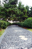 Pine. Nanchang, China's Square on the edge of a stone path Stock Photos