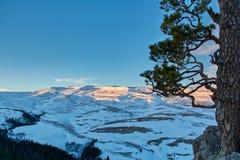 Pine and Abadzesh snow mountain at sunrise Stock Photos
