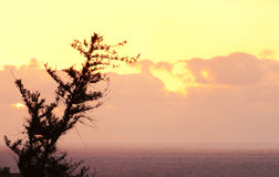 Pine against sunset sky Royalty Free Stock Photography