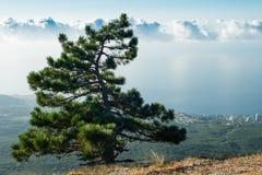 Pine on Ai-Petri Stock Images