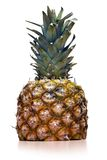 Pine apple royalty free stock photo