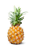 Pine apple. A single ripe pineapple on white isolated Stock Photos