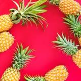 Pine Apple Tropical Fruit Yellow Natural Organic Stock Images
