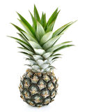 Pine apple on white background,isolate fruits. Royalty Free Stock Photo