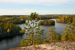 Pine and autumn lake landscape Royalty Free Stock Photo