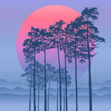 Pine on the background of the dawn. Pine on the background of a winter dawn, and the mountains and the woods in the distance in haze, fog Stock Photo