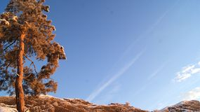 Pine on the background of hills and blue sky. stock photography