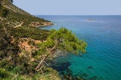 Pine on background of the Mediterranean sea. Akamas. Cyprus Stock Photo