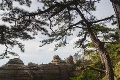 Pine on a background of mountains. The tree grows on top of the mountain range Stock Images