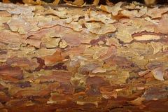 Pine Bark Stock Photography