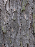 Pine bark. Texture of pine bark Royalty Free Stock Image