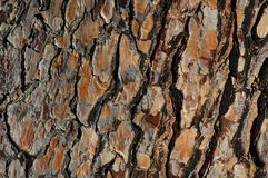 Pine bark. A pine bark texture / background royalty free stock photo